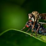 Ako sa zbaviť komárov? Osvedčené rady a domáce recepty