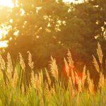 Starostlivosť o záhradu vo vysokých horúčavách – na čo by ste nemali zabúdať?